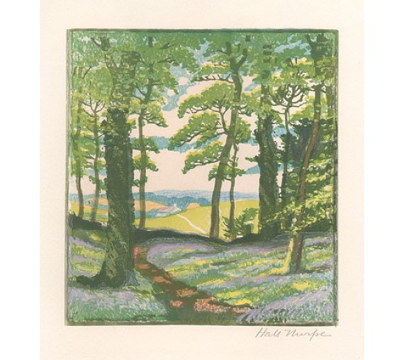Bluebell Wood John Hall Thorpe colour woodcut