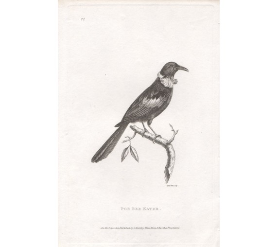 Poe Bee Eater engraving Griffith 1811