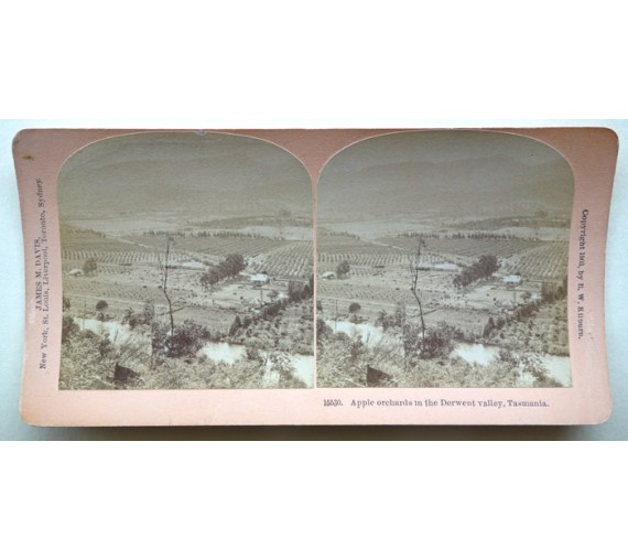 Apple Orchards Derwent Valley Tasmania stereoview photograph