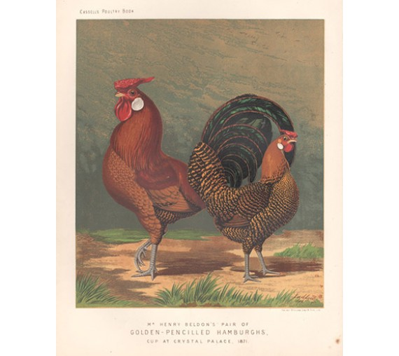 Cassells Book Poultry Golden Pencilled Hamburghs Chromolithograph Ludlow