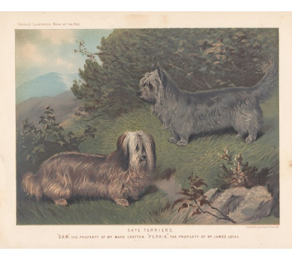 Skye Terriers Chromolithograph Cassell book dog