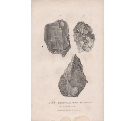 Selenites Lithograph Major Mitchell 1839