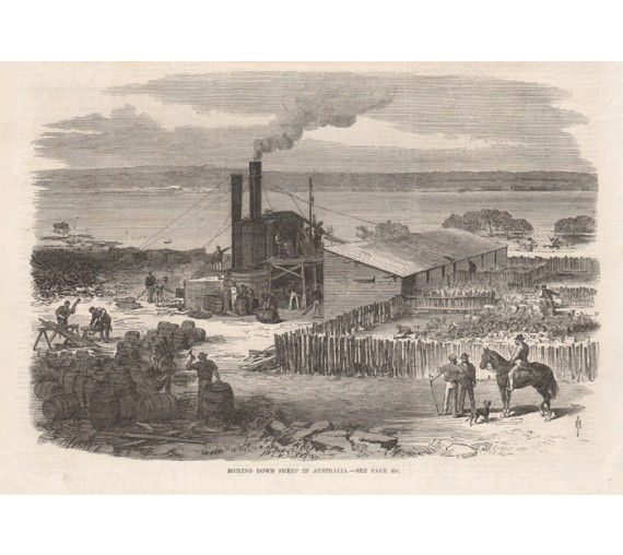 Boiling Down Sheep Australia engraving 1868