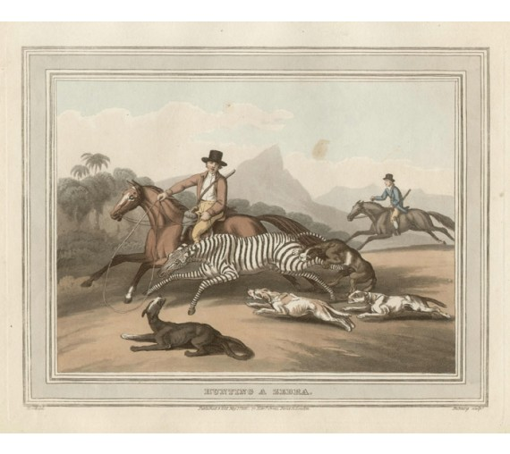 Zebra Africa  game hunting Howitt aquatint antique print