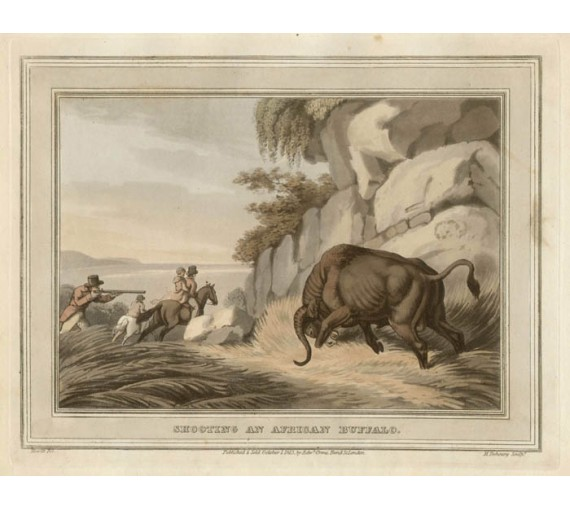 Shooting Buffalo Africa game hunting Howitt antique print