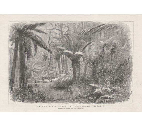 State Forest Dandenong Victoria engraving 1881