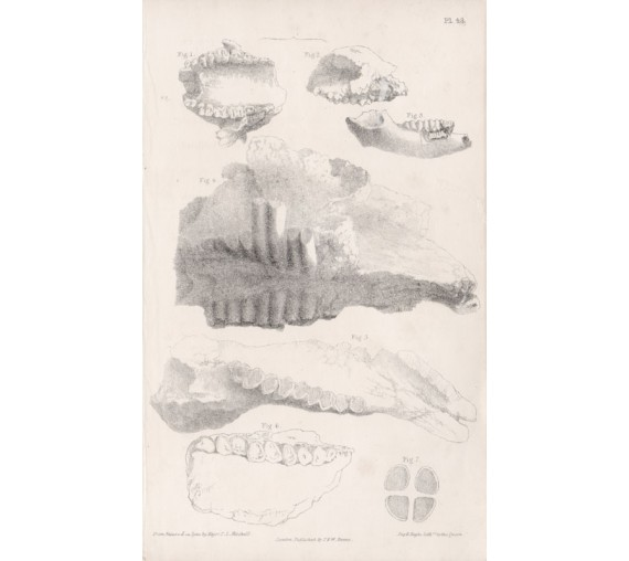 fossil remains lithograph major thomas livingstone mitchell