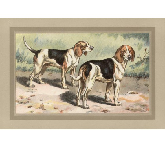 Beagle Chromolithograph print gun dog breed