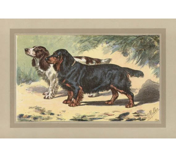 Black Spaniel Chromolithograph print gun dog breed