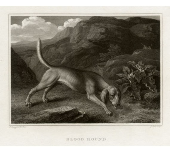 Bloodhound engraving Scott Philip Reinagle dog