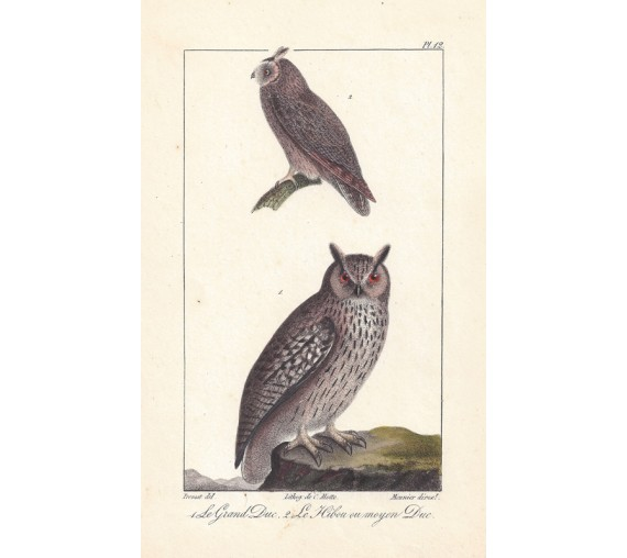 Buffon Owls French antique Lithograph Motte Oudart