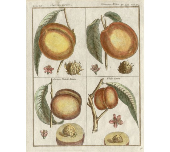 peach dumonceau duhamel fruit botanical print antique engraving