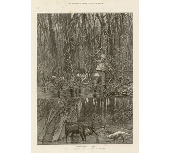 Elk Sambhur Hunting Ceylon antique engraving Sri Lanka