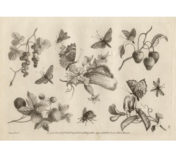 Ladies Amusement Butterflies Fruit Copperline engraving Fenn