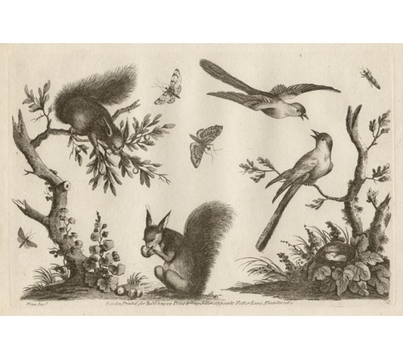 Ladies Amusement Birds Squirrels engraving Fenn