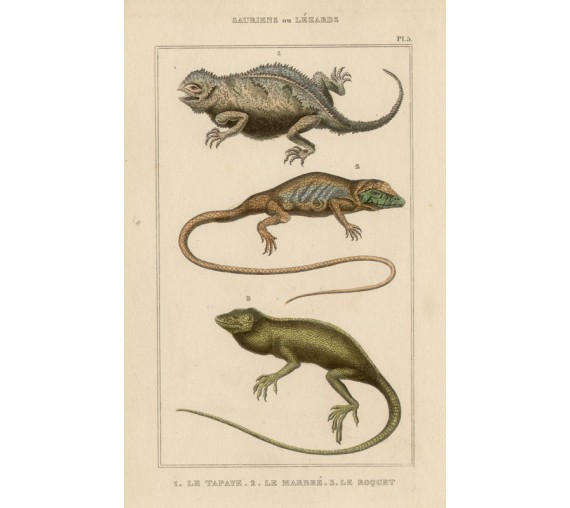 Lizards French antique engraving print