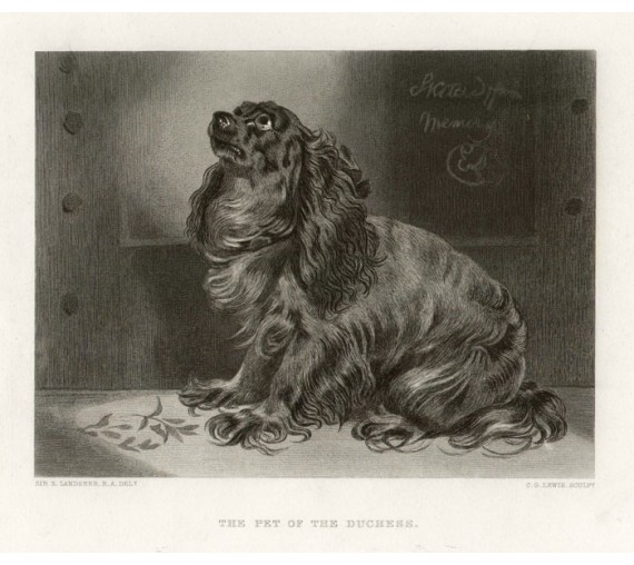 Pet Duchess engraving Lewis Edwin Landseer spaniel dog