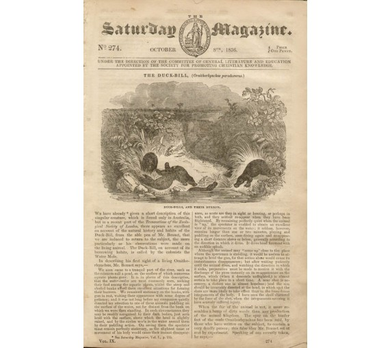 Duck-Bill Platypus engraving Saturday Magazine 1836