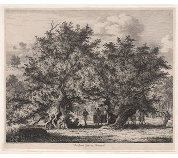 great yew forlingal sylvia britannica strutt etching tree