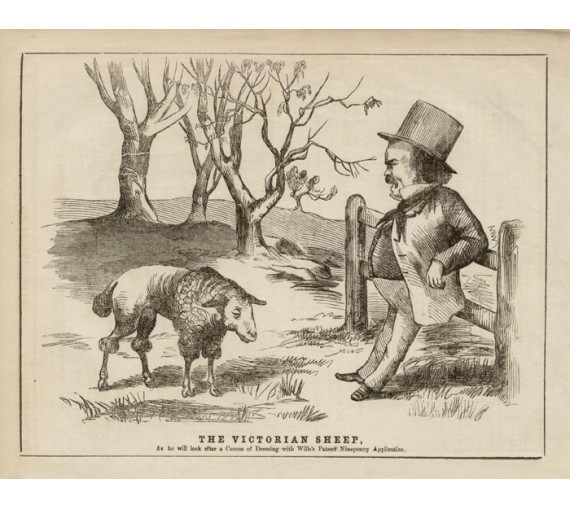 Melbourne Punch engraving The Victorian Sheep