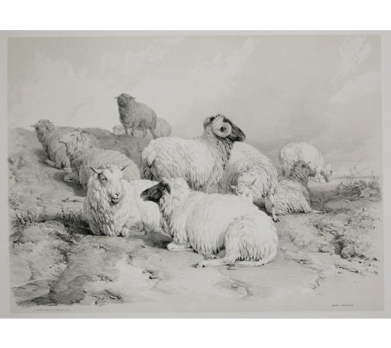 Down Grazeing Tinted lithograph Thomas Sidney Cooper