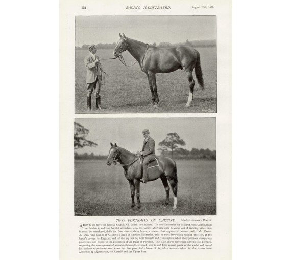 Carbine photgravure Australian racehorse horrseracing horse antique print