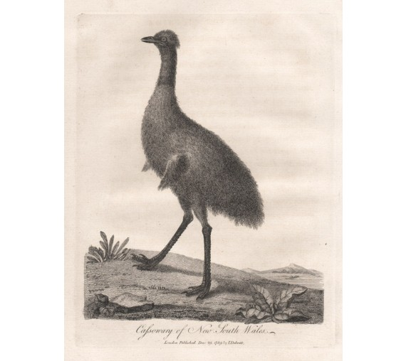 Cassowary New South Wales Emu engraving 1789