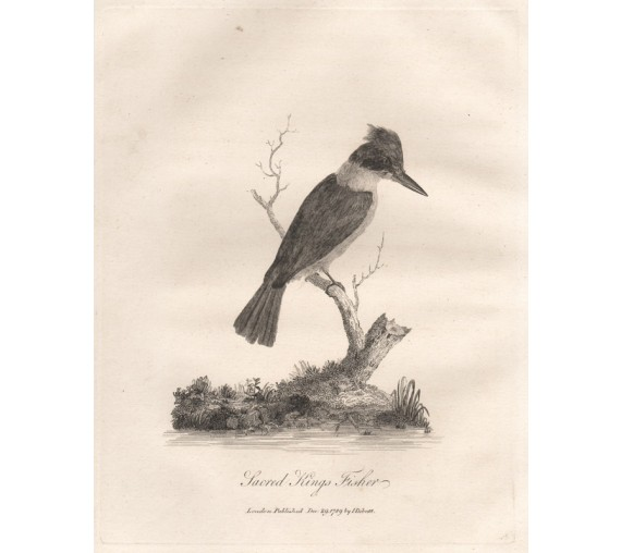 Sacred Kings Fisher kingfisher engraving 1789