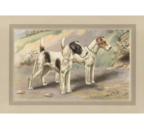 Wire haired Fox Terrier Chromolithograph print gun dog breed