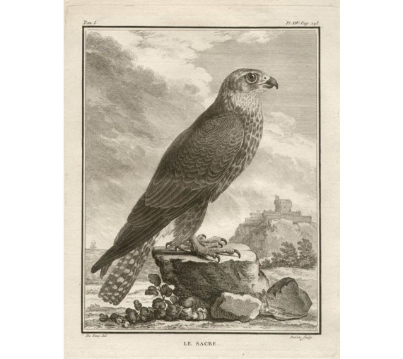 Le Sacre French antique bird engraving Seve