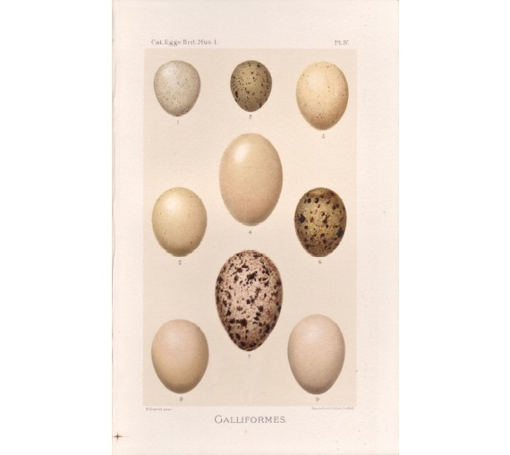 bird-eggs-print-galliformes