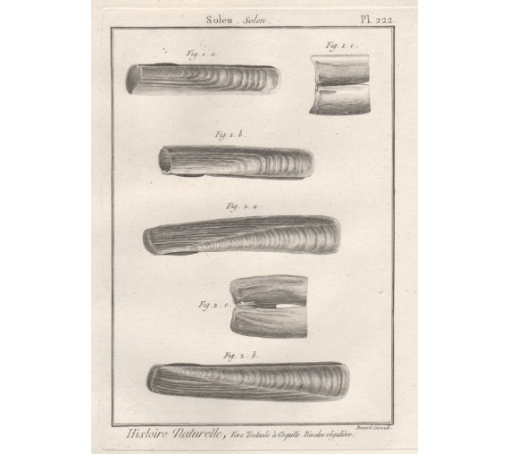 Shells engraving razor