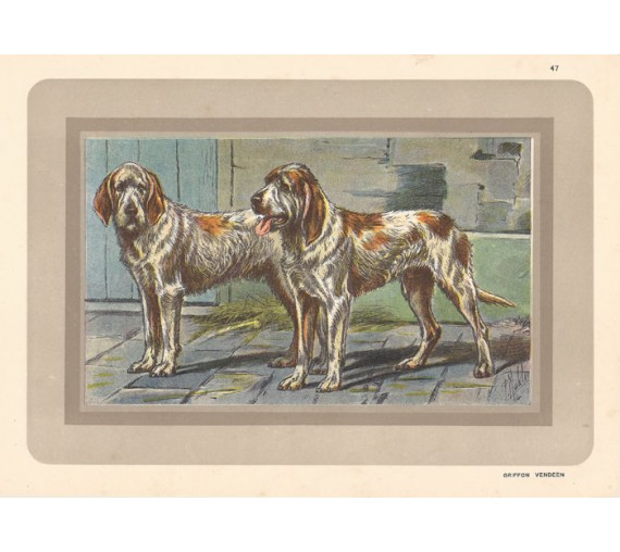 Griffon Vendeen Chromolithograph print gun dog breed