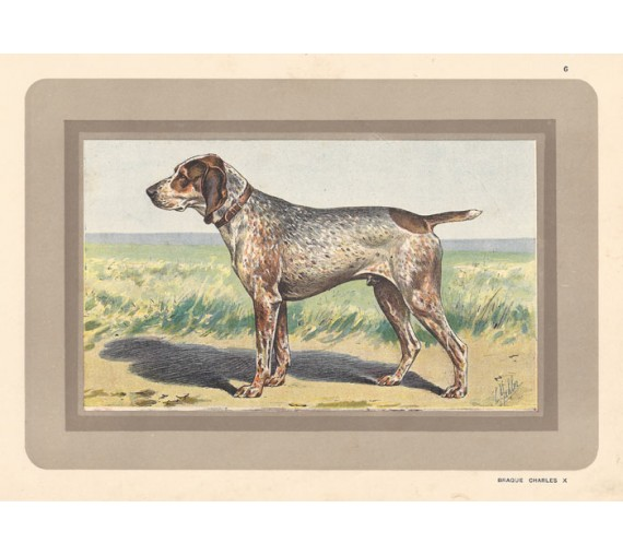 braque charles X Chromolithograph print gun dog breed