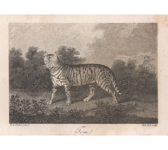 tom cat chalon engraving