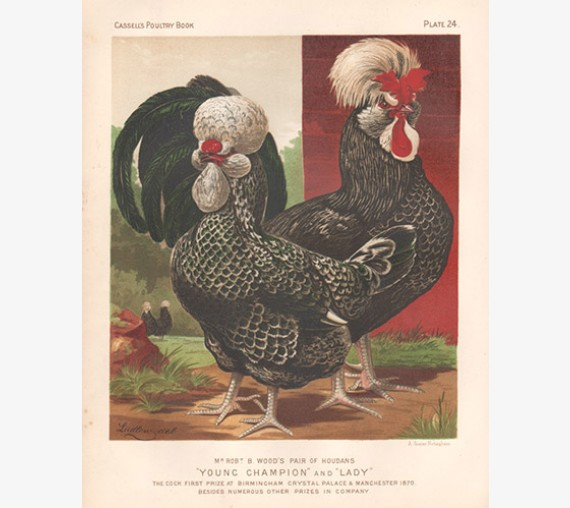 Cassells Book Poultry Houdans Chromolithograph Ludlow
