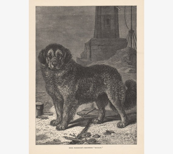 Berghund engraving Cassell book dog