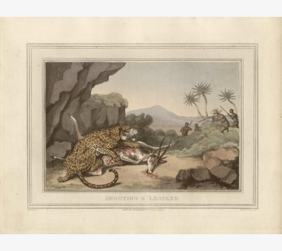 Shooting Leopard Africa game hunting Howitt antique print