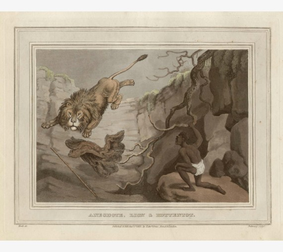 Lion Hottentot Africa game hunting Howitt antique print