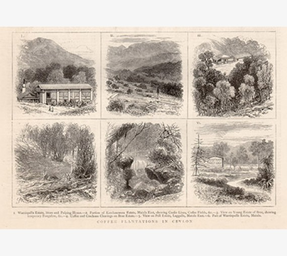 Coffee Plantations Ceylon antique engraving Sri Lanka