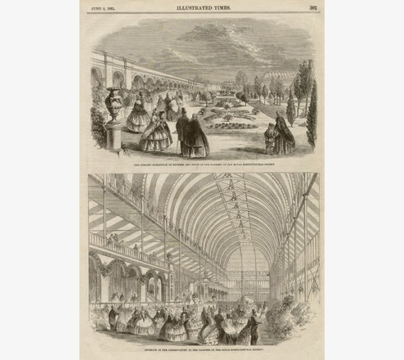 royal horticultural society antique engraving print
