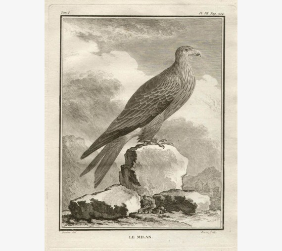 Le Milan French antique bird engraving Seve