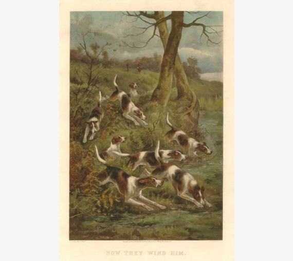 Now they wind him foxhunting chromolithograph c1900