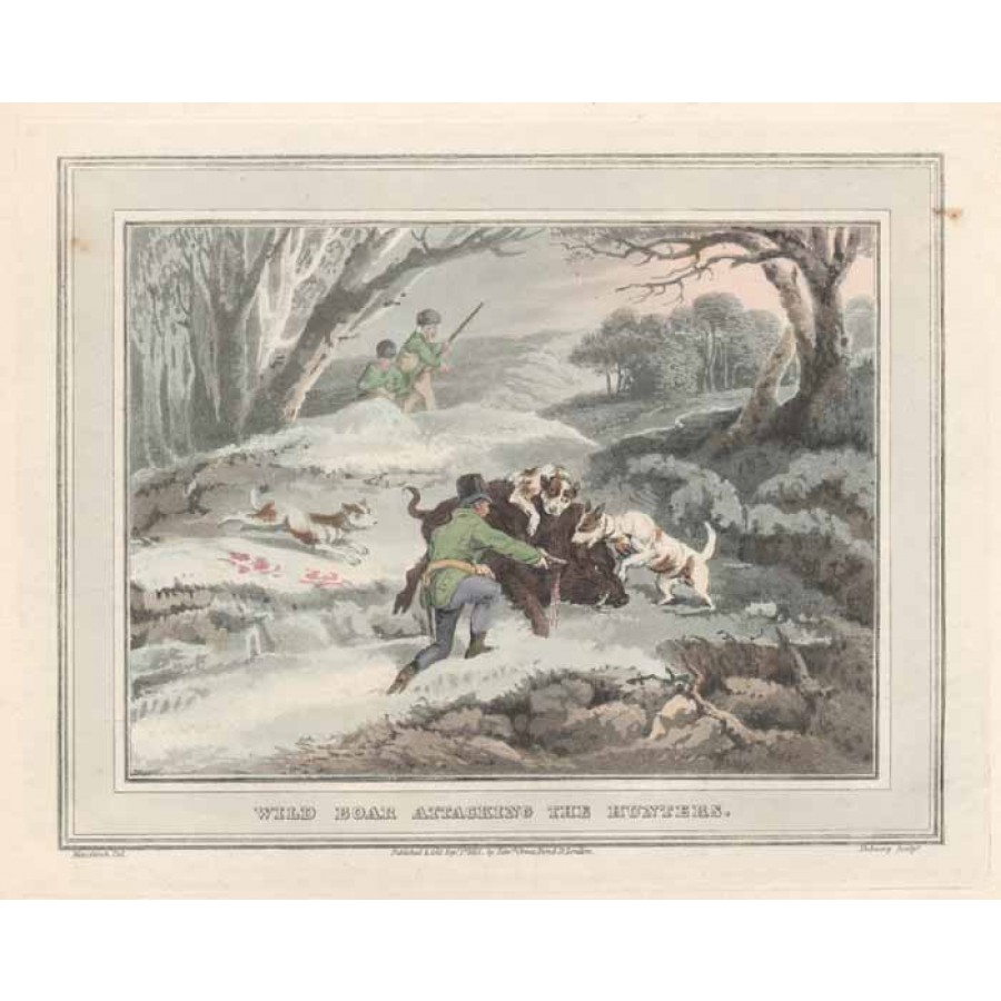 Wild Boar attacking the Hunters - colour aquatint from