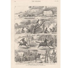 Life Backwoods Queensland engraving Graphic 1878