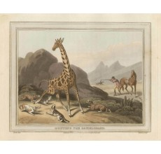 Giraffe Africa game hunting Howitt aquatint antique print