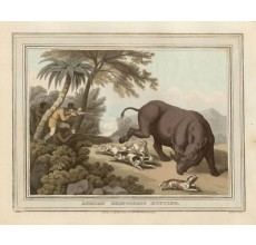 Rhinoceros Africa game hunting Howitt aquatint antique print