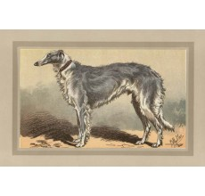 Borzoi Chromolithograph print gun dog breed