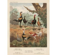 Poultry Game Bantams Chromolithograph  JW Ludlow