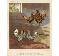 Cassells Poultry Gold SilverLaced Bantams Chromolithograph Ludlow